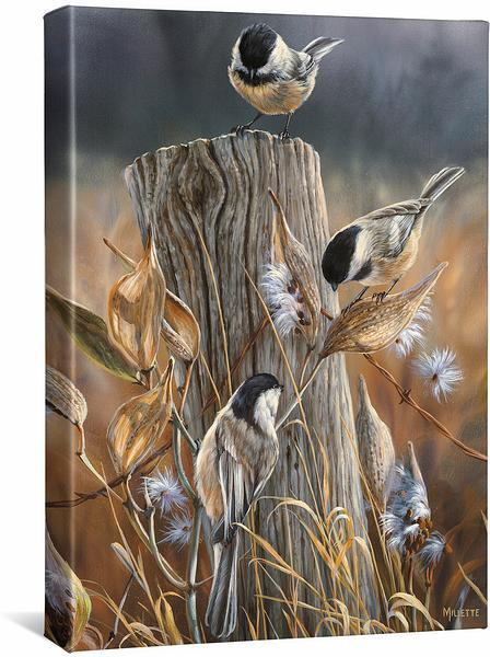<I>Autumn&mdash;black Capped Chickadee</i> Gallery Wrapped Canvas