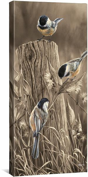 <i>Autumn Black Capped Chickadees</i>