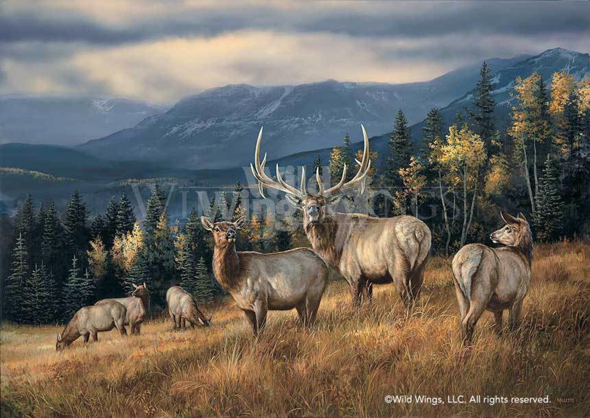 <I>Autumn Gold&mdash;elk</i> Artist Proof Print<Br/>17H X 24W Art Collection