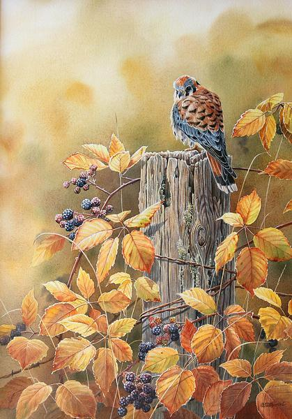 <I>Autumn Mist&mdash;kestrel</i> Limited Edition Print<Br/>24H X 17W Art Collection