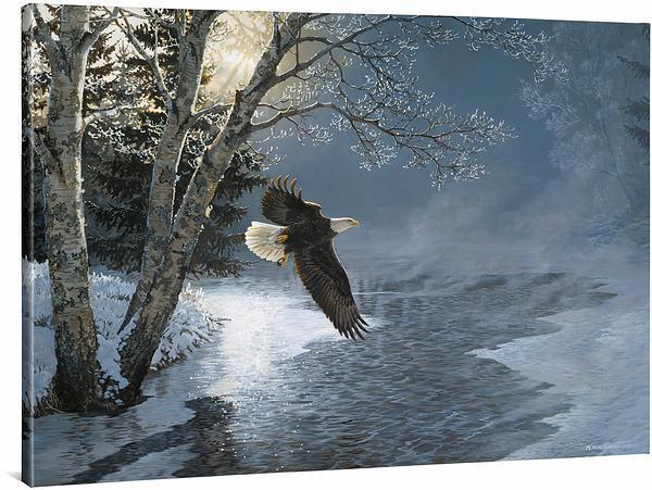 <I>Awakening&mdash;bald Eagle</i> Gallery Wrapped Canvas