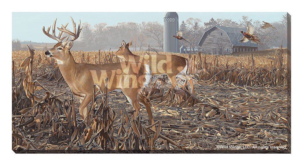 Back Forty—Whitetail Deer.
