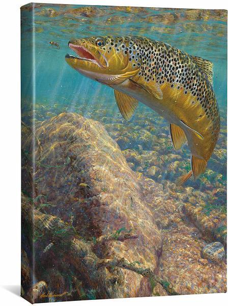 <I>Bad Decision&mdash;brown Trout</i> Gallery Wrapped Canvas