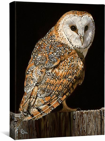 <I>Barn Owl</i> Gallery Wrapped Canvas