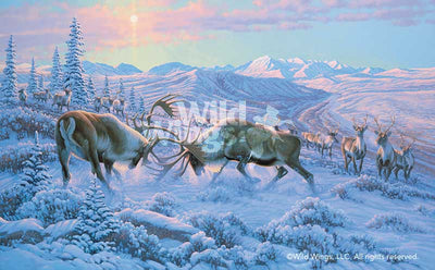 Battling Caribou Art Collection