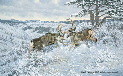 Battling Mule Deer Art Collection