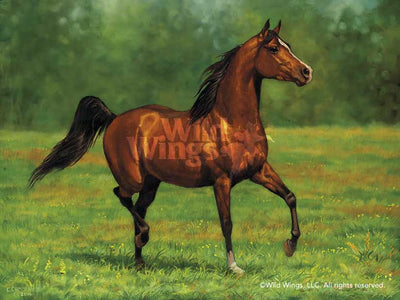 Arabian Bay-Horse Art Collection