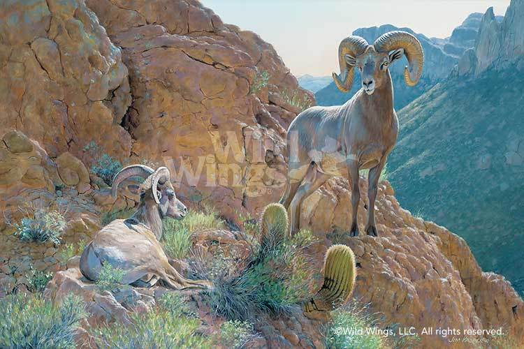 <I>Overseer&mdash;desert Bighorn Sheep</i> Limited Edition Canvas<Br/>24H X 36W Art Collection