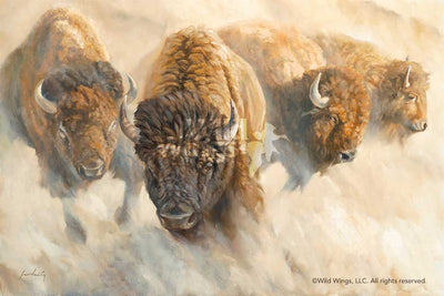 Dust of Time—Bison.