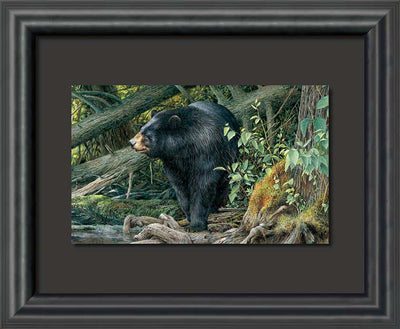 When Spring Calls-Bear Art Collection