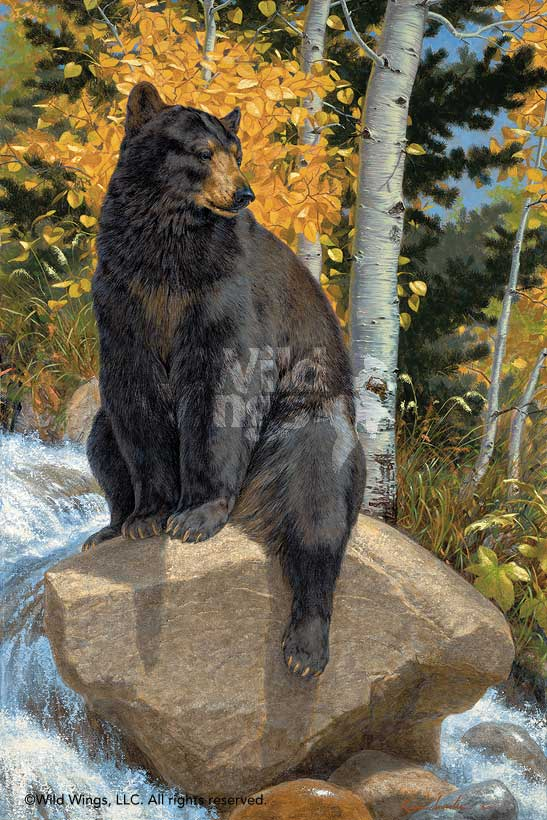 <i>Paws that Refreshes&mdash;Black Bear</i>