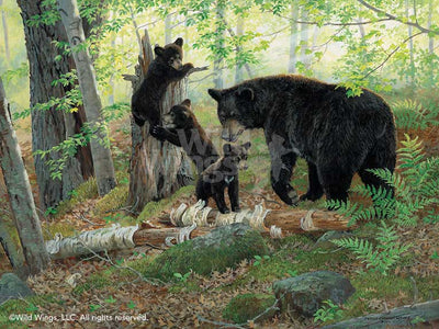 Playtime-Black Bears Art Collection