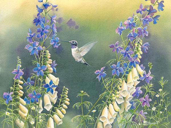 Black Chinned Hummingbird with Foxglove & Delphinium