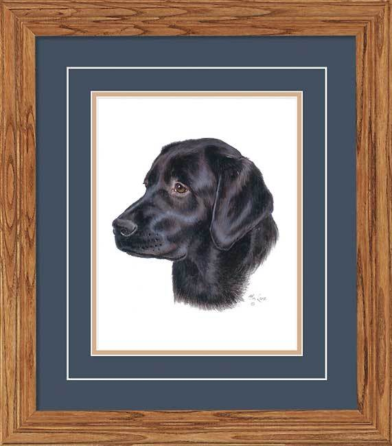 Black Lab Portrait.