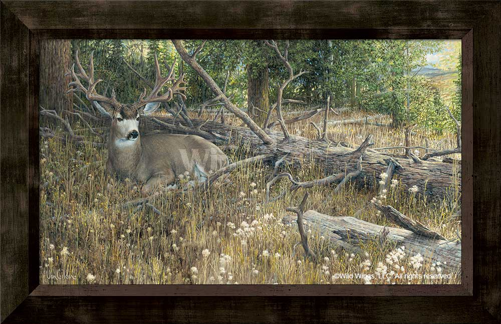 Blow Down Buck-Mule Deer Art Collection