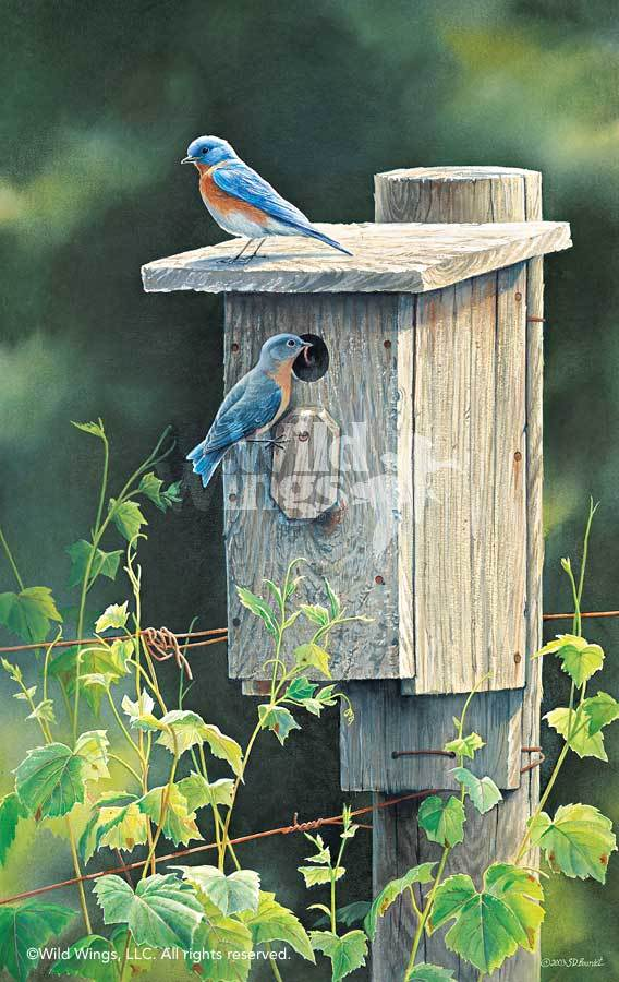 <i>New Beginnings&mdash;Bluebirds</i>