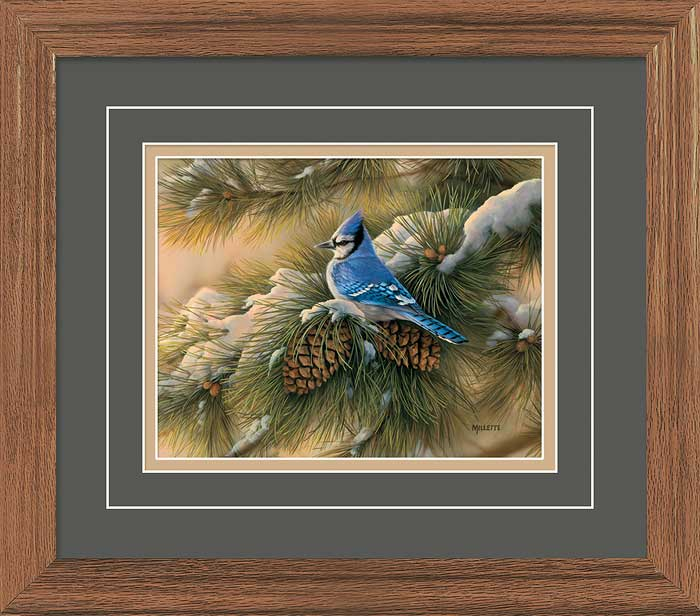 December Dawn-Bluejay.