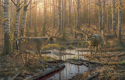 Border Wars—Whitetail Deer.