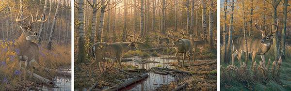 Border Wars-Whitetail Deer Art Collection