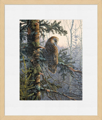 Boreal Twilight-Great Gray Owl Art Collection