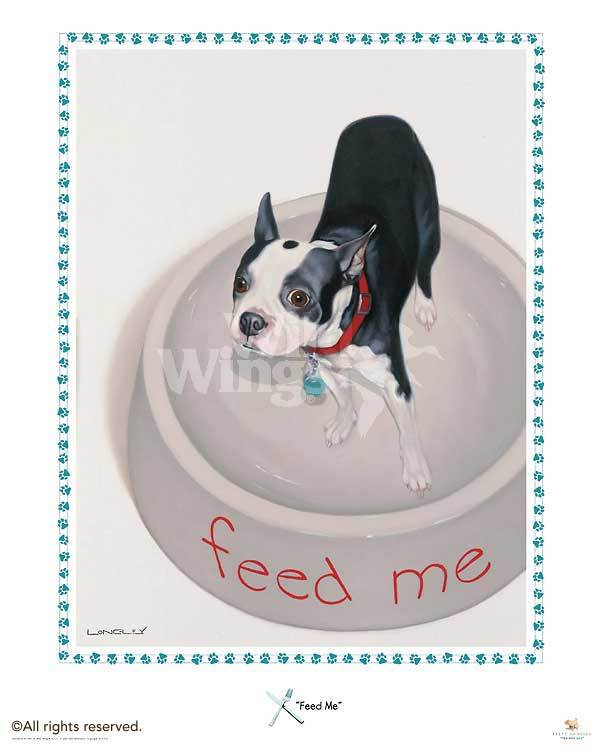 Feed Me—boston Terrier Framed Poster