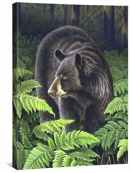 <I>Bracken Hollow&mdash;black Bear</i> Gallery Wrapped Canvas