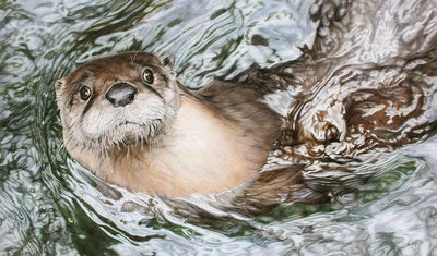 Bright Water—American River Otter.
