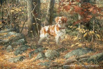 <I>Stone Wall Brittany&mdash;dog</i> Limited Edition Print<Br/>17H X 25.5W Art Collection