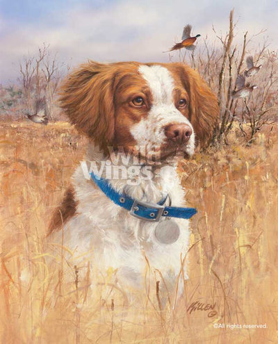 Top Dog—Brittany Spaniel.