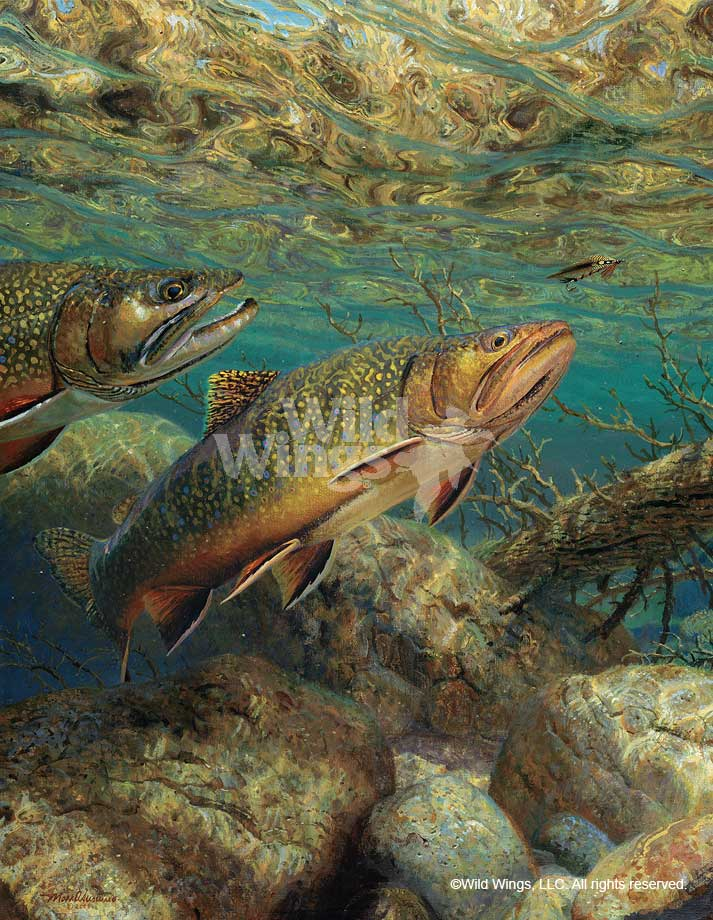 The Competitors-Brook Trout Art Collection