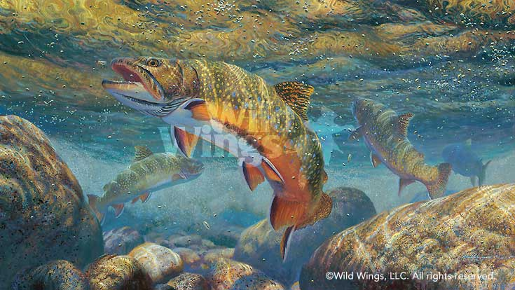 Matching the Hatch-Brook Trout Art Collection