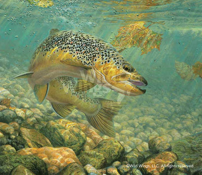 Duped-Brown Trout Art Collection
