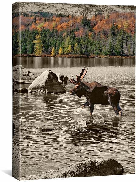 Bull Moose on Autumn Day.