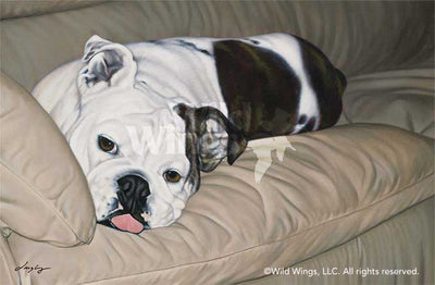 Make Me-Bulldog Art Collection