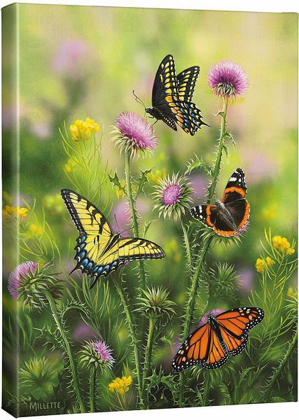 <I>Butterflies & Thistle</i> Gallery Wrapped Canvas