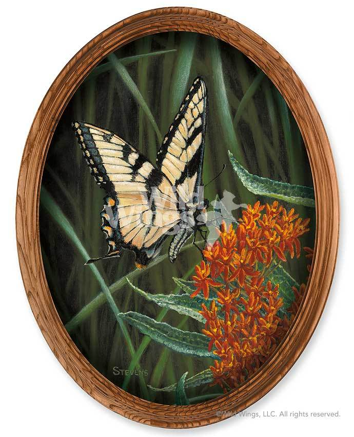 Flying Tiger—butterfly Framed Canvas Oval