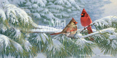 <i>Winter Light&mdash;Cardinals</i>