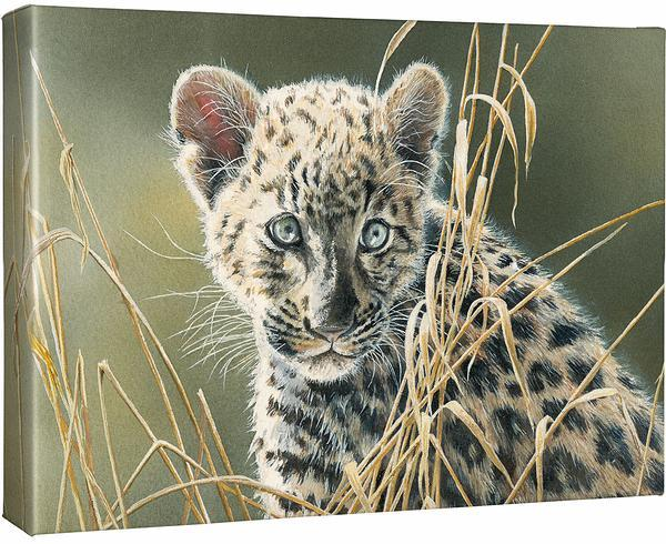 <I>Cat Eyes&mdash;leopard</i> Gallery Wrapped Canvas