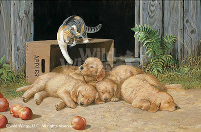 The Wake Up Call—Cat & Puppies.