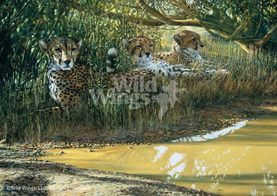 Beating the Heat-Cheetahs Art Collection
