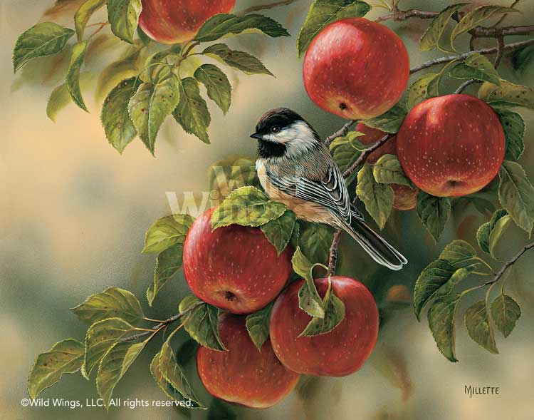 <i>Orchard Visitor&mdash;Chickadee</i>
