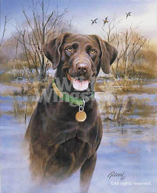 <i>My Companion&mdash;Chocolate Lab</i>