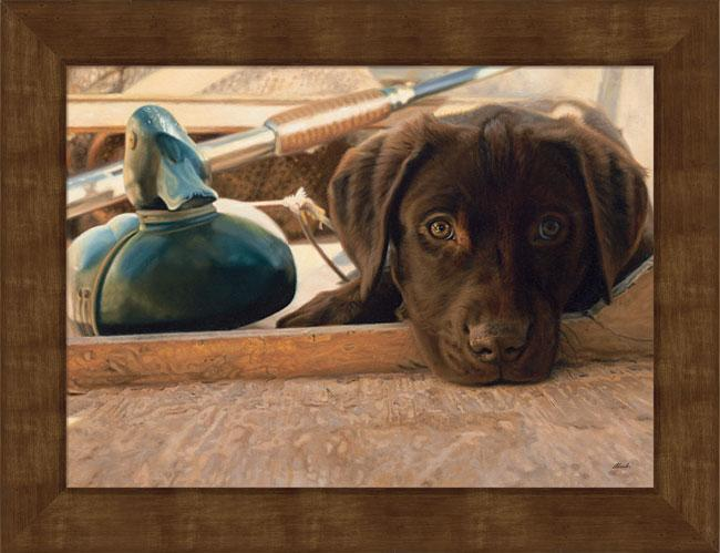 Small Chocolate Lab Puppy.