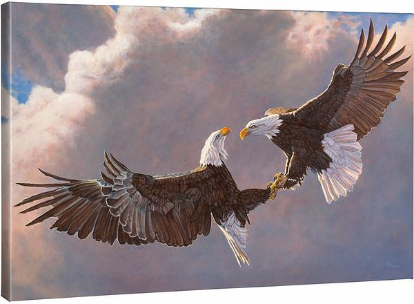 <I>Clash Of The Titans&mdash;bald Eagles</i> Gallery Wrapped Canvas