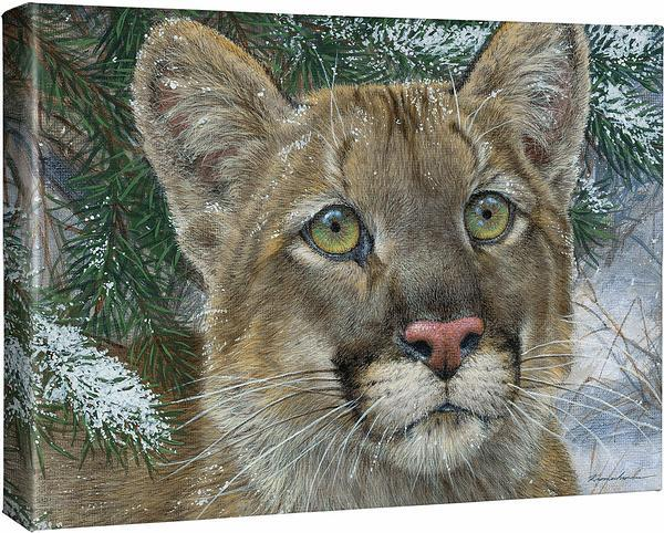 <I>Clear Sighted&mdash;mountain Lion</i> Gallery Wrapped Canvas