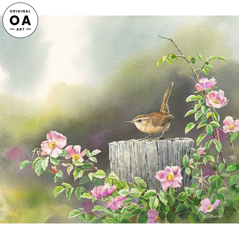 Coming Up Roses—Carolina Wren.