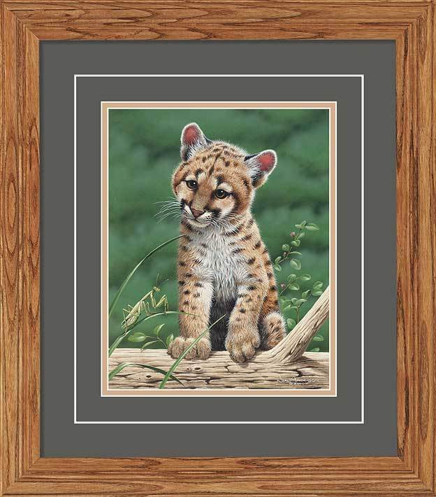 Cougar In Training Gna Deluxe Framed Print