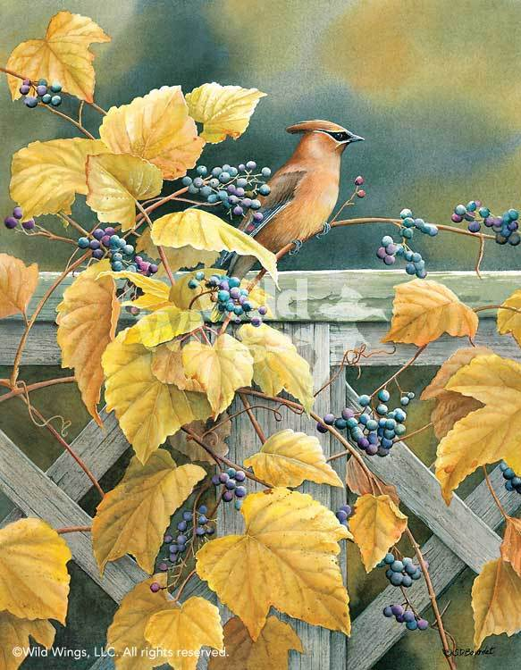 <I>Country Garden&mdash;cedar Waxwing</i> Limited Edition Print<Br/>18H X 14W Art Collection