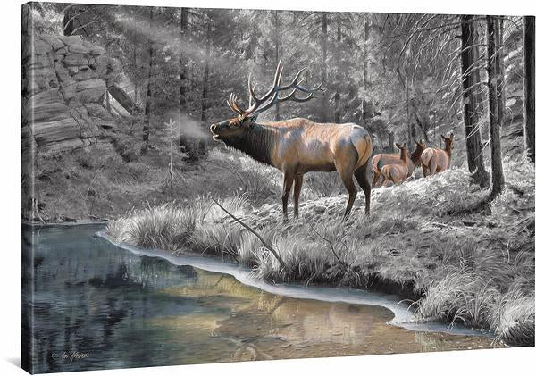 <I>Crossing Bear Canyon&mdash;elk</i> Gallery Wrapped Canvas