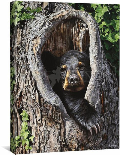 <I>Cubby Hole&mdash;black Bear</i> Gallery Wrapped Canvas<Br/>20.5H X 16W Art Collection